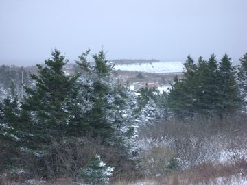 The house in winter nestled in the spruce