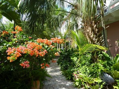 tropical garden entry path to the front veranda