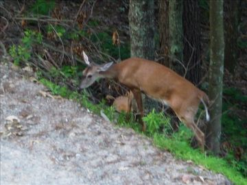Deer, fox and wild turkeys have been seen on property and in surrounding area.