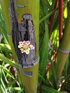 Small flowers growing in lipstick palm