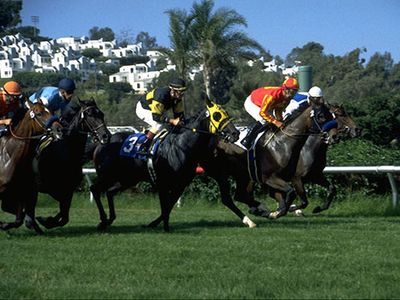 Spend the afternoon at the races in Del Mar.