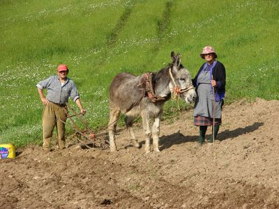 Vega de Liébana apartment rental - Villagers planting potatoes