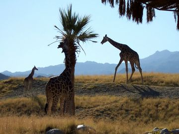 Thousand Palms condo rental - The Living Desert Zoo and Gardens