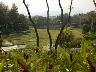 Resort Garden and rice fields - Chiang Mai hotel vacation rental photo