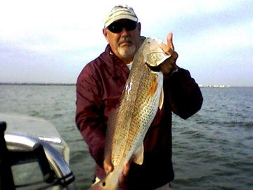 Oversized Redfish...in the fall the 'bull reds' start their run. That's fun!