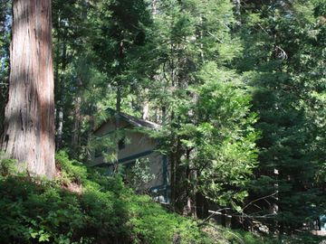 Mi-Wuk Village house rental - Beautiful view of front of the cabin-home, surrounded by redwood & pine trees