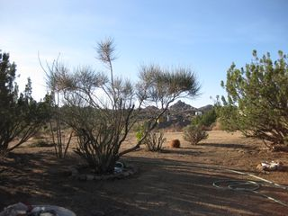 Yucca Valley house photo - View out front