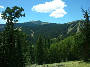 View from a hiking trail just above the ski mountain road. Get out and explore!
