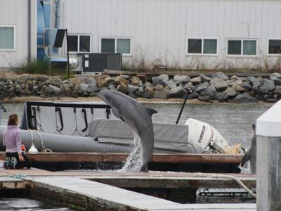 Dolphins being trained at the Navy Marine Mammal Program (NMMP)