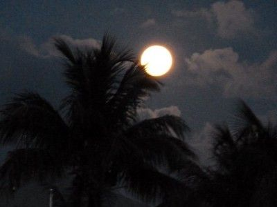 full moon rise over the Palm trees and lights a path over the Atlantic