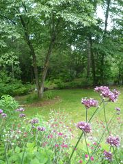 Swannanoa cabin photo - side yard