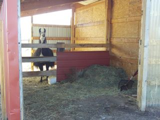 Salida house photo - View through feed/tack to single stall