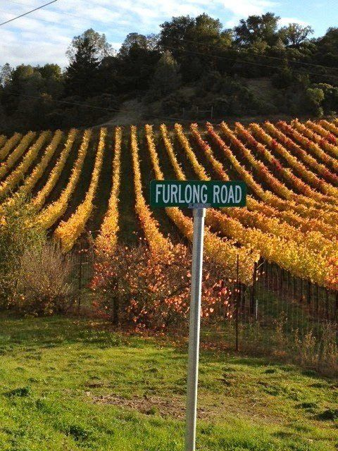 Our vineyard in the fall