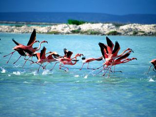 Bonaire villa photo - Flamingo's kasdaasbonaire.com