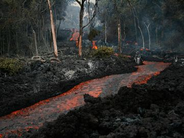 River of lava flowing to the ocean through the ohia forest near the volcano