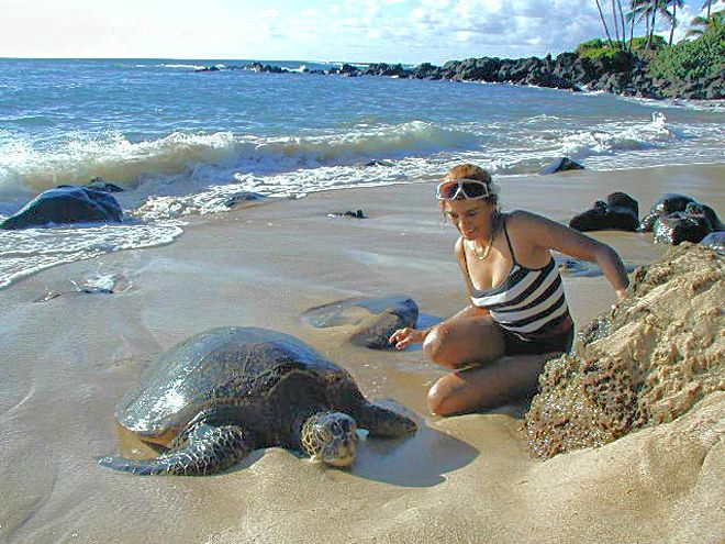 Sea Turtles Rest On The Beach Close To The House, You Can Visit Them Anytime!!