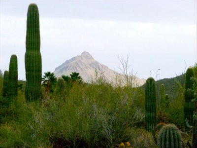 Tucson house rental - Beautiful desert and mountain views