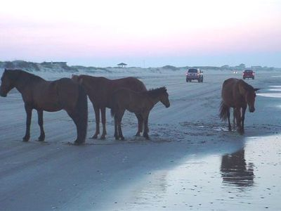Wild Spanish Mustangs On The Beach!!