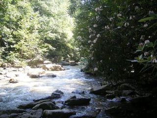 Seven Springs cabin photo - Native Laurels in bloom along stream on the property