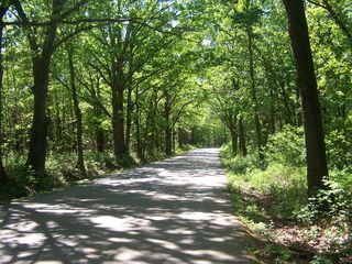 Osage Beach condo photo - Beautiful tree lined drive thru the park to the condominium complex