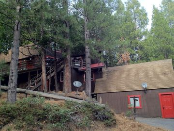 Pinecrest cabin rental - The cabin is tucked away among huge pine trees.