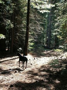 Dogs can run free on forest trails