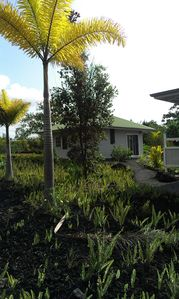 Path to the Cottage with palms and Ohia from the parking area (photo 2013)