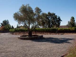 Sonoma house photo - A 100 Year Old Olive Tree welcomes you to the Sonoma Hideaway