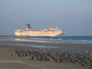 Cape Canaveral condo photo - Daily parade of cruiseships