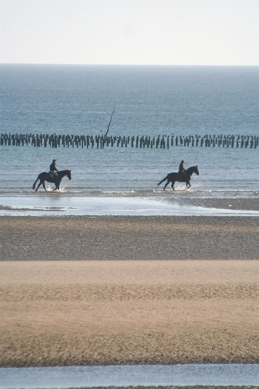 Horse pss the Mussel beds Utah Beach