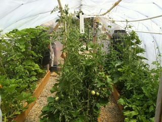Santa Fe cottage photo - Tomatoes, chilies, and cucumbers in the greenhouse