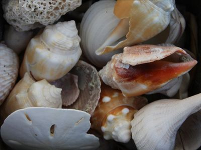 This area is unique in its abundance of seashells and shark teeth (our photo).