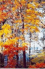 Frankfort lodge photo - Come back for the fall colors and our annual fall festival.