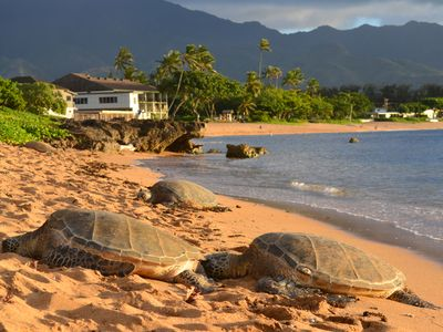 Turtles always come to rest in our calm beach in the afternoon.