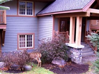 Mont Tremblant condo photo - Young deer like to eat flower outside our condo