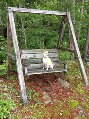 The love seat at camp (dog not included in rental!). - Alton house vacation rental photo