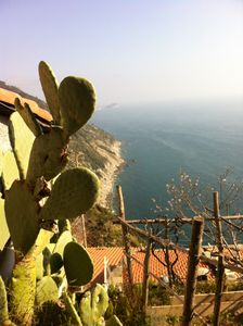 home cellar up to 4 people through vineyards to the sea, terrace and great views!