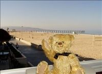 VRBO Bear enjoying Beautiful Hermosa Beach
