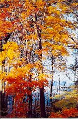 Frankfort lodge photo - Come back for the colors and the family-friendly Fall Festival.