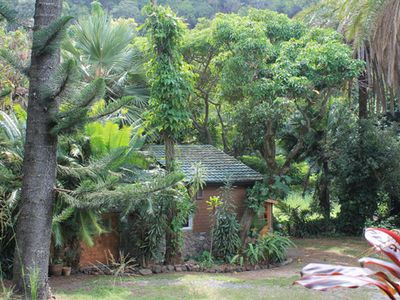 Gingerbread House, Flowers, Fruiting Trees, Forest & Lush Jungle! North Shore