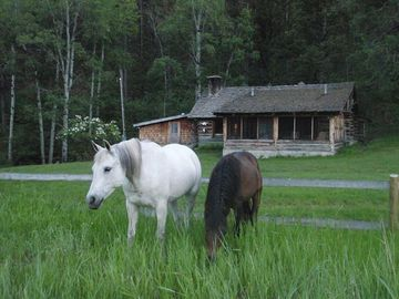 Horses in front of Main Lodge