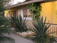 Summer Special Rates 600 Feet to Beach - Pool/5 Rest. /Conv.Store all in 4 blks