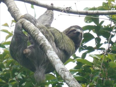 Sloth shows how to relax