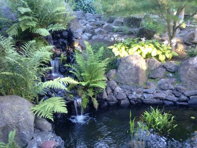 Waterfall and fern grotto in the morning light.