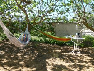 Evia cottage photo - Hammocks, for relaxing under the trees