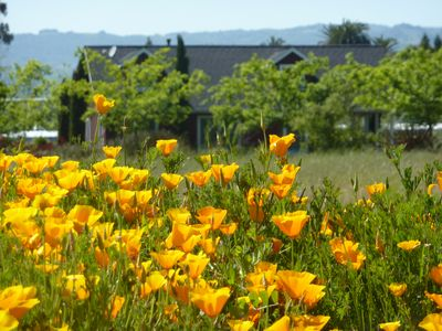 Sonoma cottage rental - Spring at the Red Viking Cottage