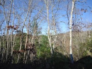 Bryson City cabin rental - .Looking in back of Cabin. All views are good.