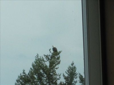 Eagle Through the Great Room Window