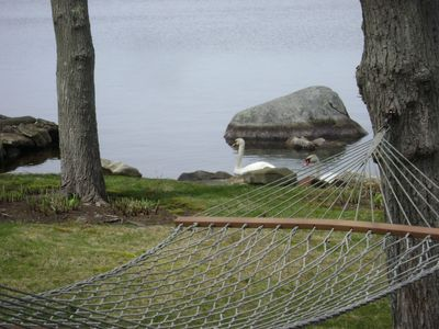 Relax on hammock in back yard while watching the swans and ducks swim by