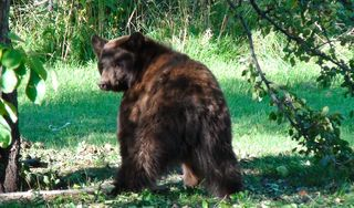 Durango house photo - If you are lucky you might see a bear in Sept or Oct.